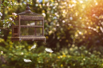 Antique Edwardian birdcage in blossom with floating feathers