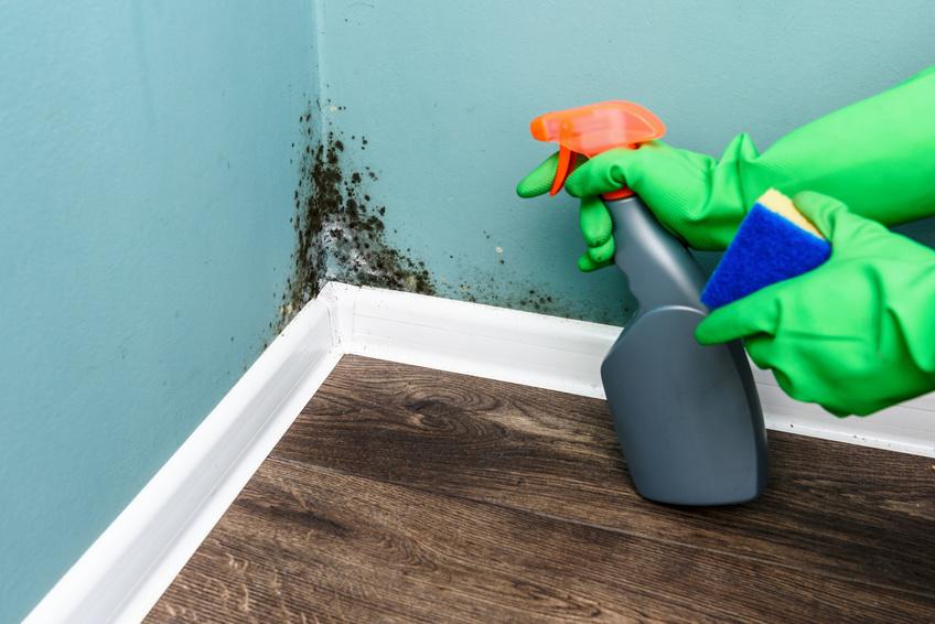 Umidita In Casa Ecco 5 Rimedi Infallibili Per Respirare Aria Pulita Scala